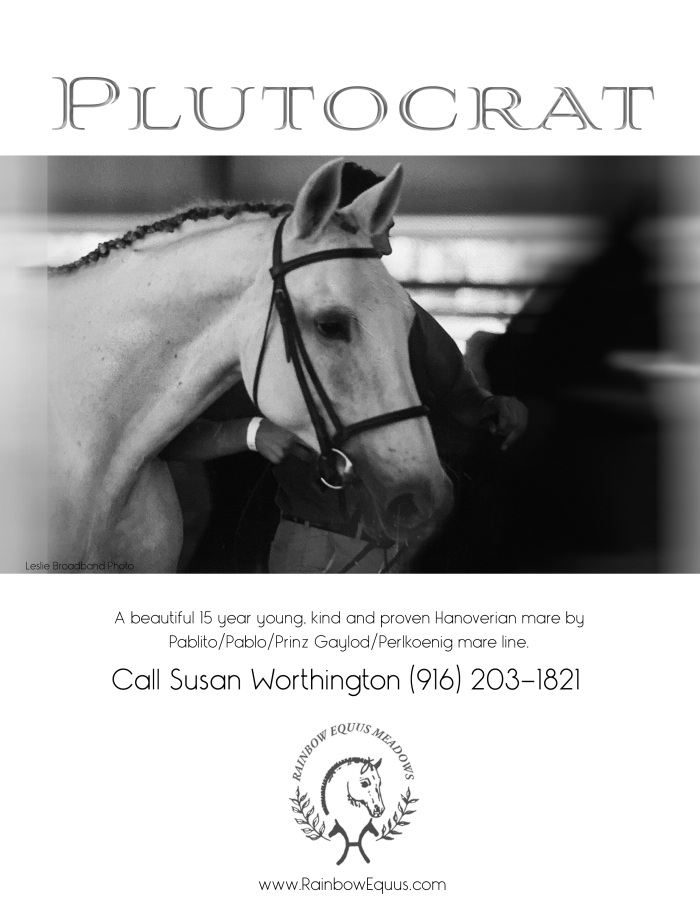 Plutocrat: 15 yo kind and proven Hanoverian mare by Pablito / Pablo / Arsenik and out of a Pablito/Prinze Gaylord Perlkoenig mare.